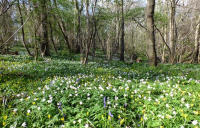 Cloud Wood, a site of special scientific interest. Photo courtesy of Leicestershire and Rutland Wildlife Trust.